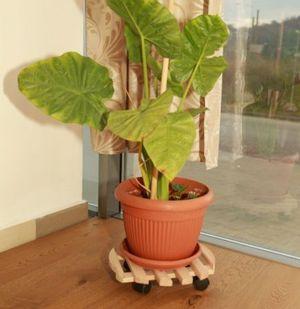 suport ghiveci plante 37615
